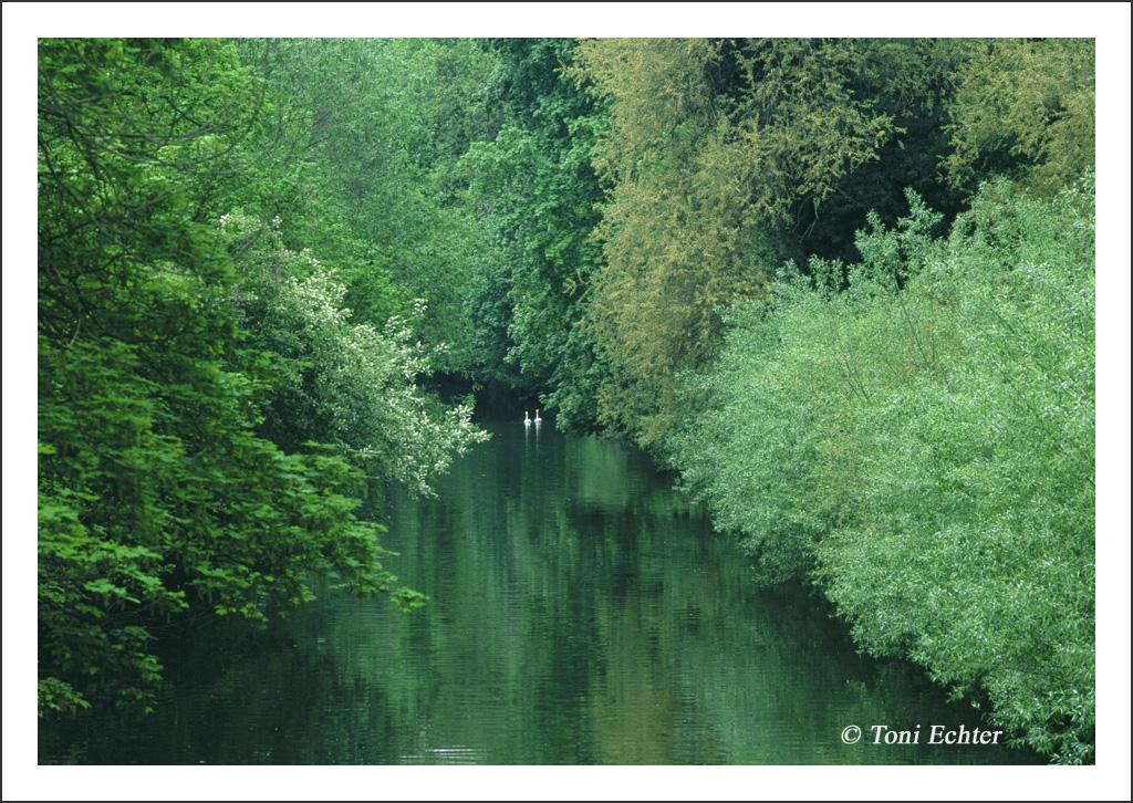 schwimmen durchs neckargrün 2010. jpg