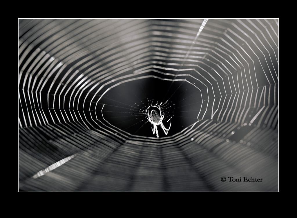 Spinne-netzzupfen