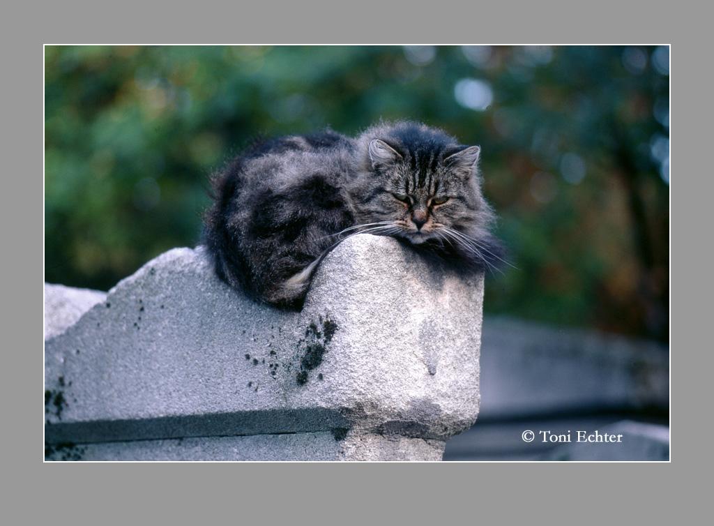 chat-cimetiere montmartre 2009