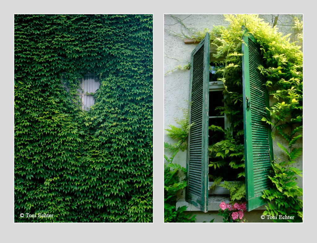 ensemble-1-im-grünen