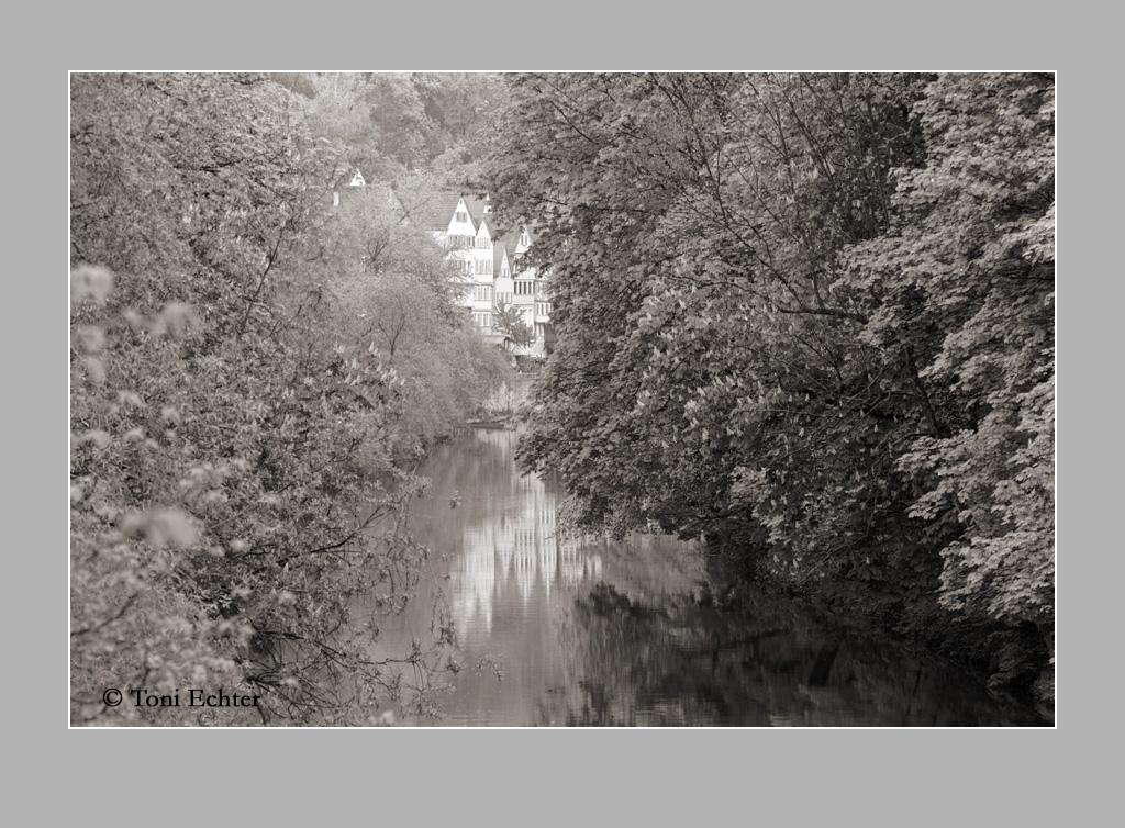 kastanienblüte über dem Neckar