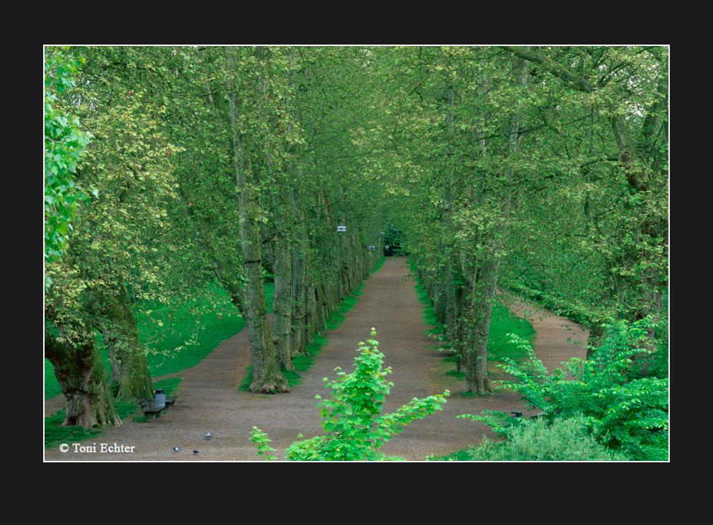 platanenallee grün